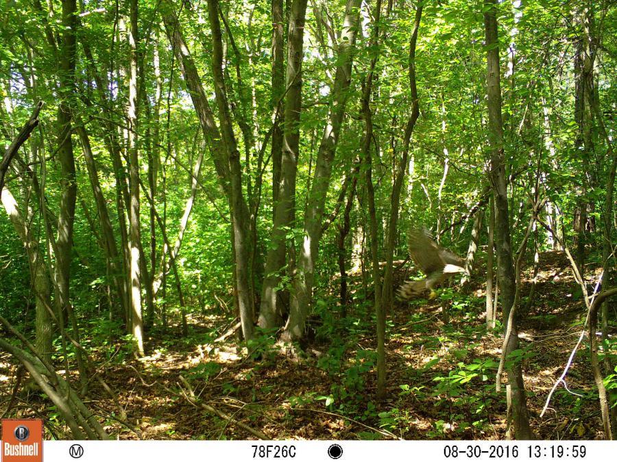 bushnell trail sentry camera manual