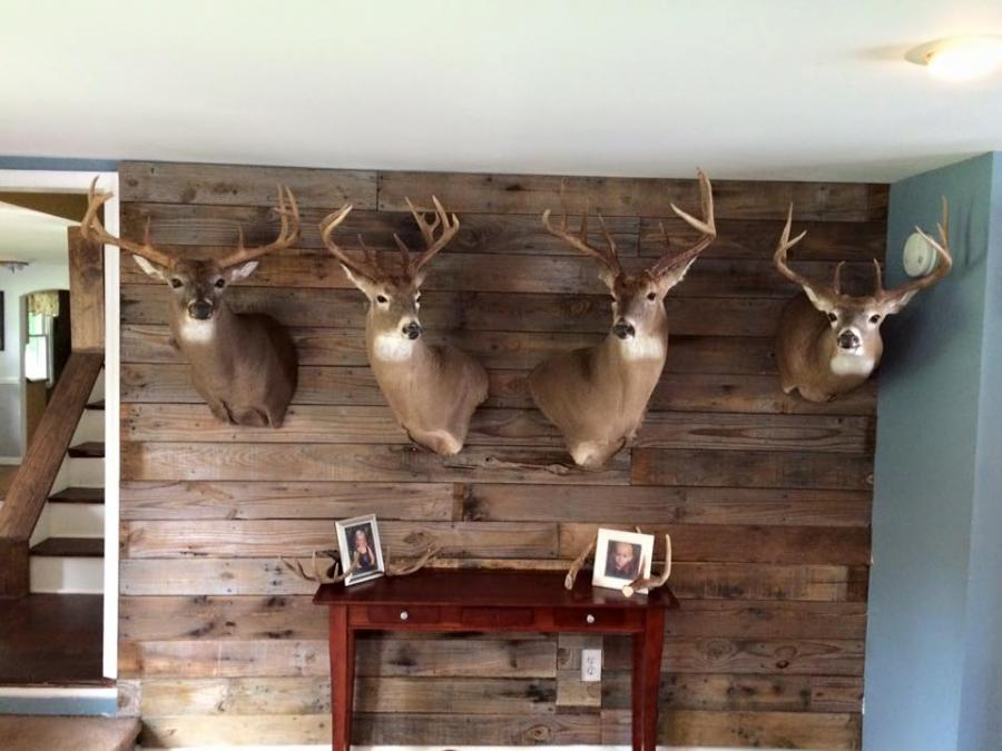 living room with deer mounts meaningful pallet wall for my mounts 19010