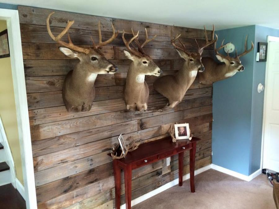 living room with deer mounts meaningful pallet wall for my mounts page 2 19010