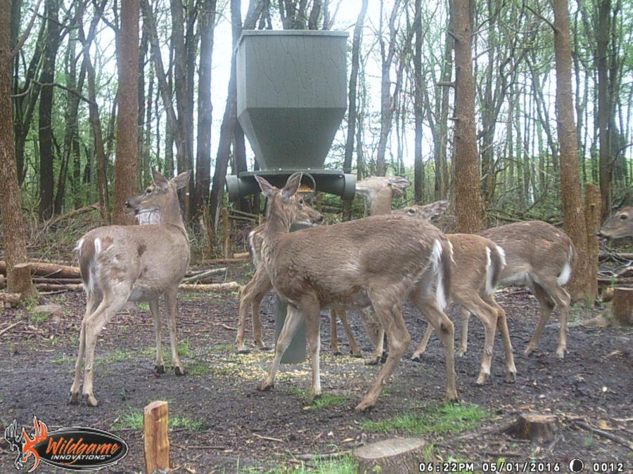 What is your favorite gravity fed deer feeder?