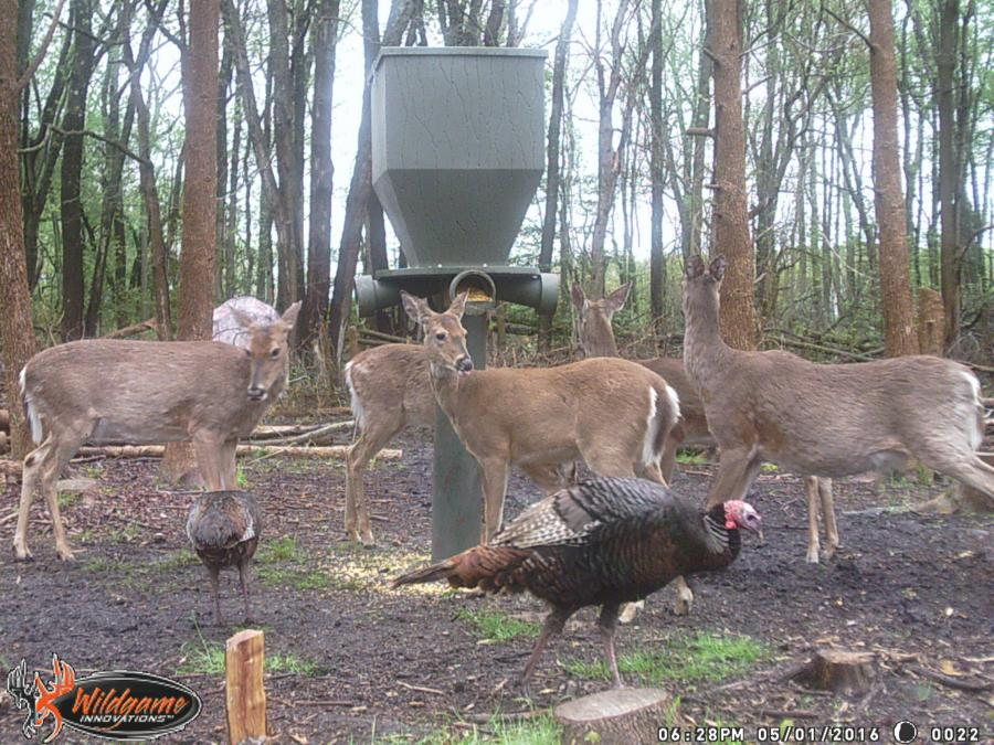 feeders hunting deer a llano stock feeder photo texas in sale at for grocery store