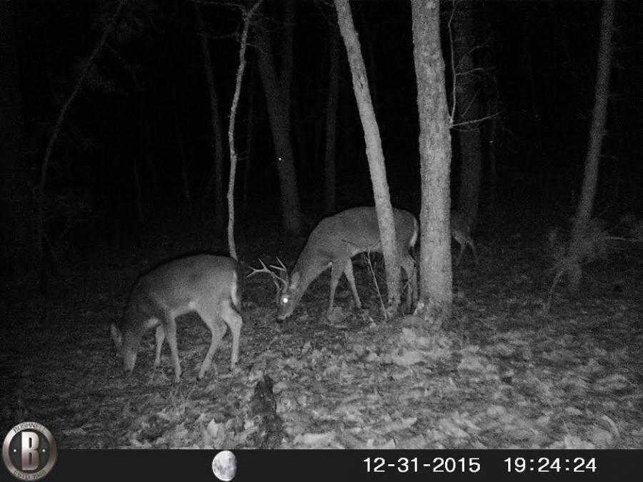 Name:  Deer.jpg Views: 684 Size:  76.5 KB