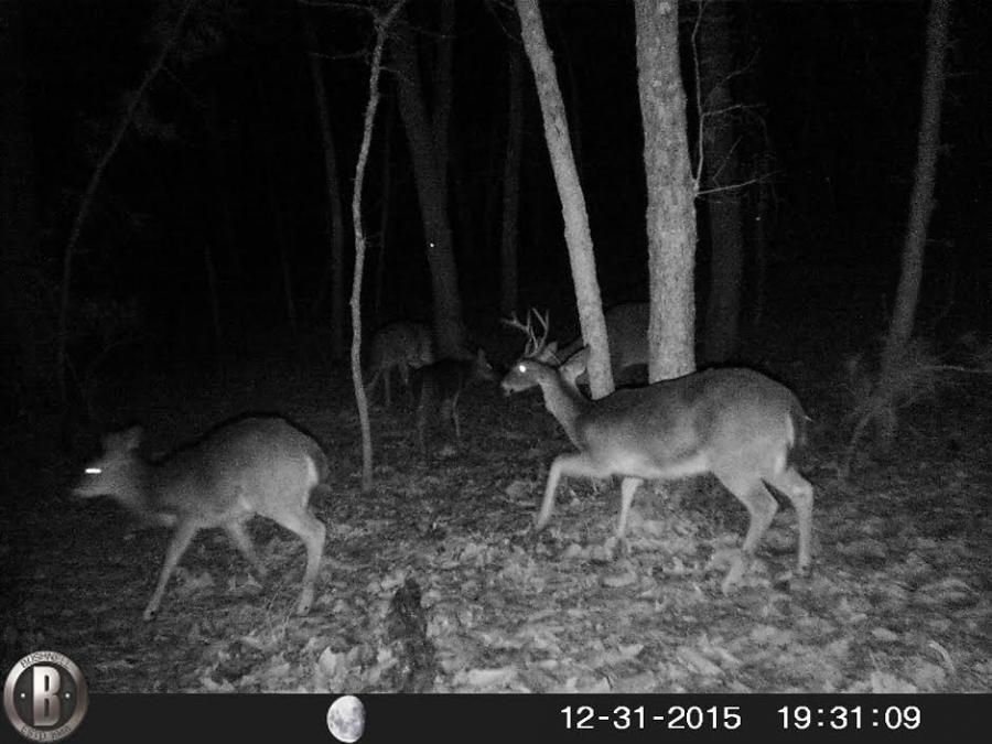 Name:  Deer1.jpg Views: 681 Size:  75.5 KB