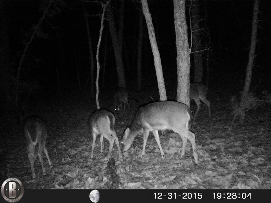 Name:  Deer2.jpg Views: 688 Size:  74.7 KB