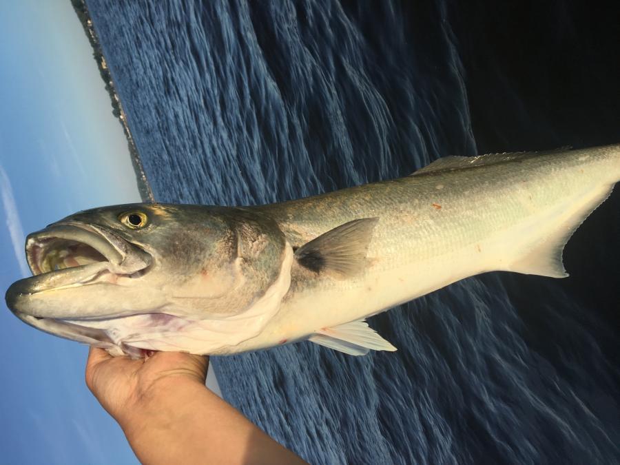 Fishblow