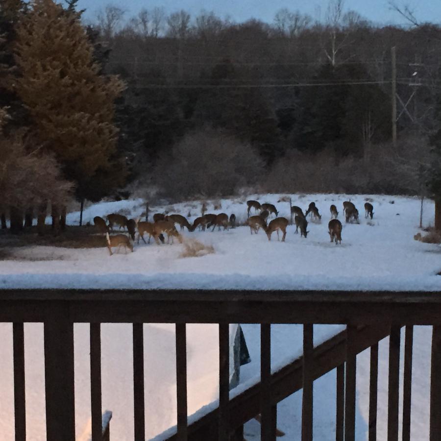 Name:  lot of deer.jpg Views: 892 Size:  81.0 KB