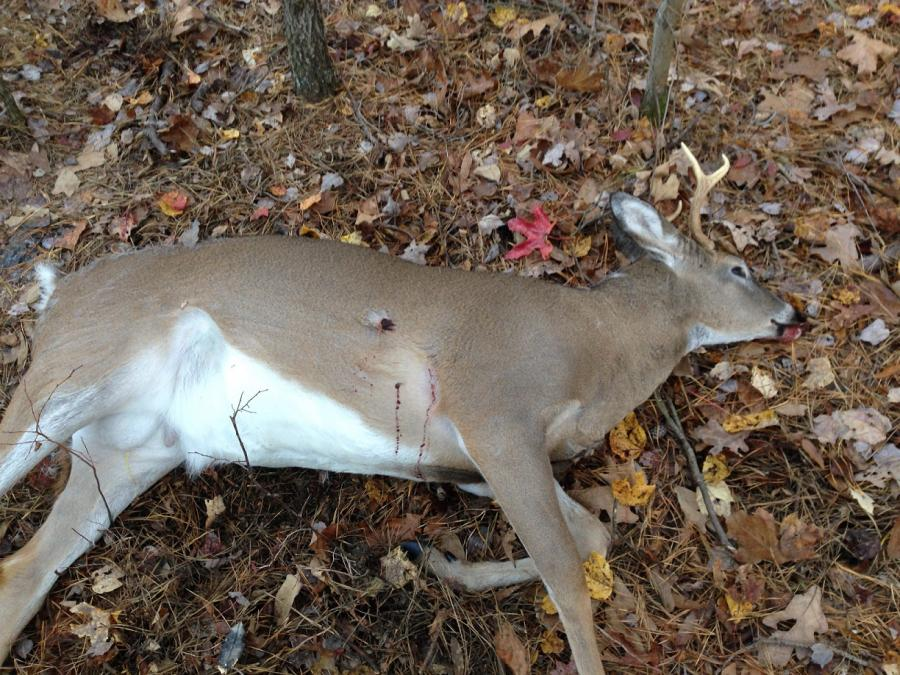 Shot a buck and arrow evidence was not what it seemed?