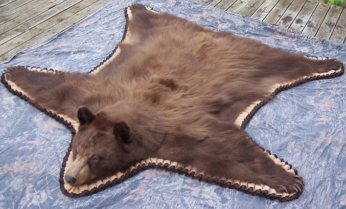 Beautiful Black Bear Rug .