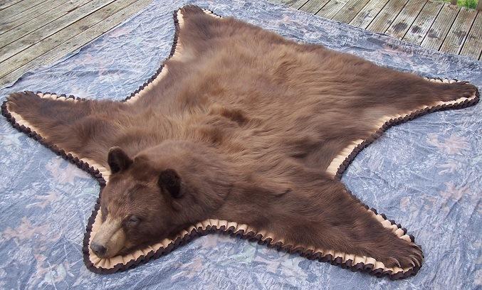 Beautiful Black Bear Rug