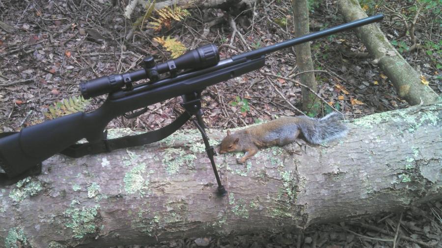 Air Rifle Hunting Pellets Pellet Rifle Hunting